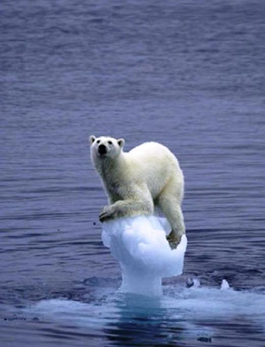 Gevolg van de opwarming van de aarde: ijsbeer op ijsschots